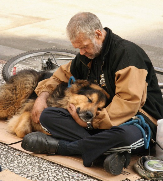 Dogs With Homeless People Look Freezing Uk